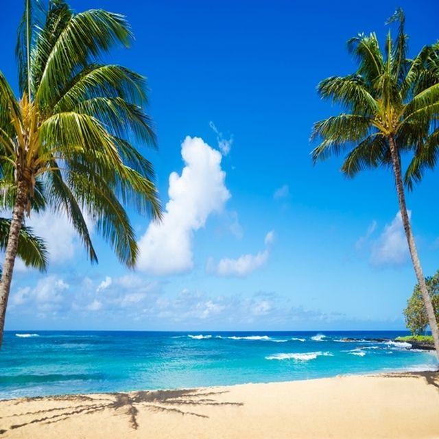 [하와이/아동][6/8,14,15] 쿠알로아랜치 무비투어+마린 해양스포츠+자유일정 6일