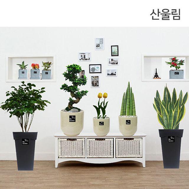 ■[프리미엄 풀세트]산울림 고품격 공기정화식물 9종(특대형 3종+대형 2종+중형 1종+화분 3종)