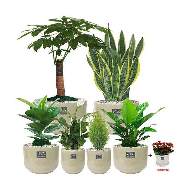 공기에 좋은 반려식물 7종