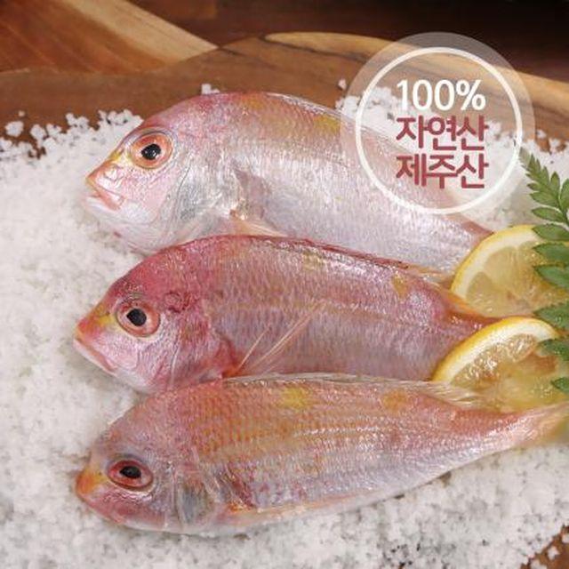 제주 자연산 황돔 300g*13팩(팩당 3마리 포장) / 총 39마리
